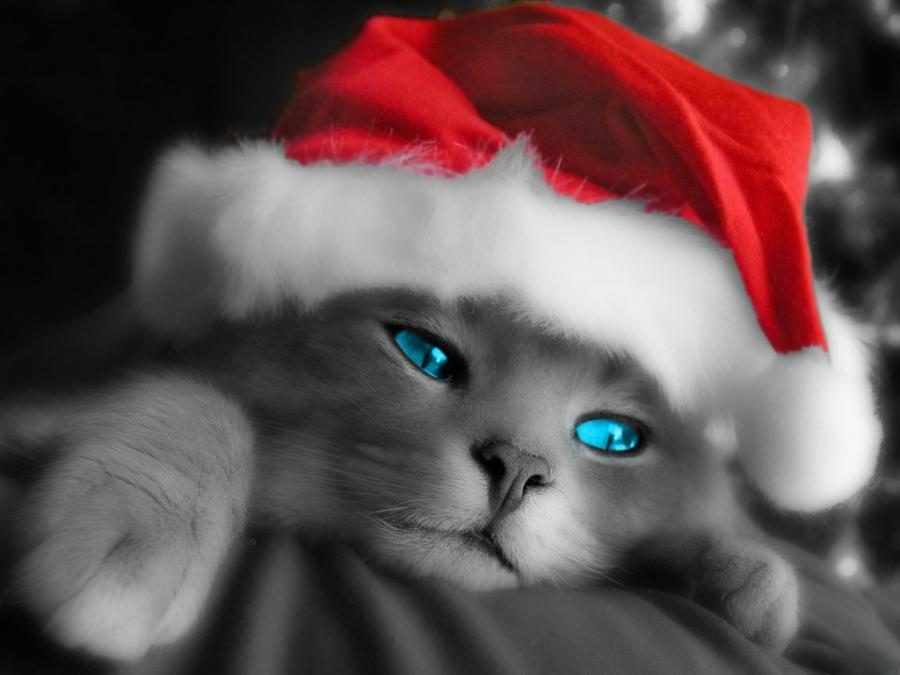 Julekalender luke 9